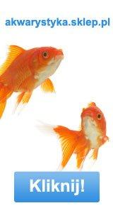 oświetlenie akwarium: akwarium