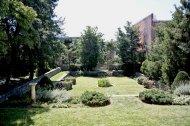 bukszpany w ogrodzie