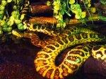 piękny wąż w terrarium
