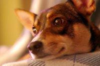 Zwierzakowo - akcesoria dla psów