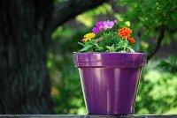 Kwiaty doniczkowe